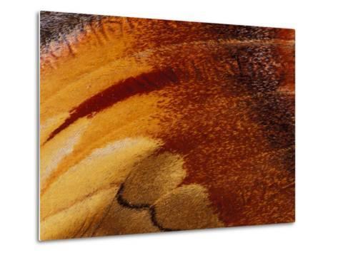 Butterfly Wing Detail-Gavriel Jecan-Metal Print