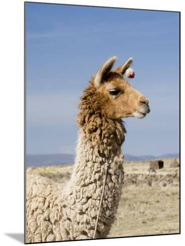 Llama Posing near Puno, Peru-Diane Johnson-Mounted Photographic Print