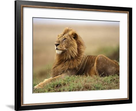 Adult male lion on termite mound-Adam Jones-Framed Art Print