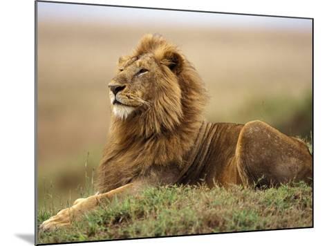 Adult male lion on termite mound-Adam Jones-Mounted Photographic Print