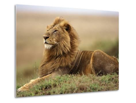 Adult male lion on termite mound-Adam Jones-Metal Print