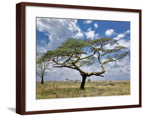 Umbrella Thorn Acacia, Serengeti National Park, Tanzania-Adam Jones-Framed Art Print
