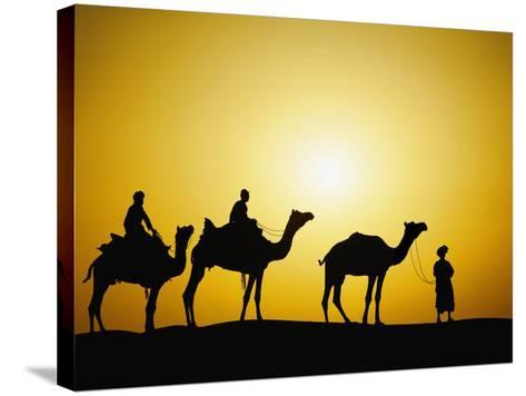 Camels and camel driver silhouetted at sunset, Thar Desert, Jodhpur, India-Adam Jones-Stretched Canvas Print