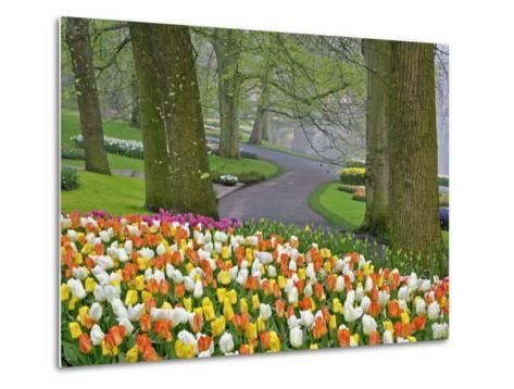 Tulips and Roadway, Keukenhof Gardens, Lisse, Netherlands-Adam Jones-Metal Print