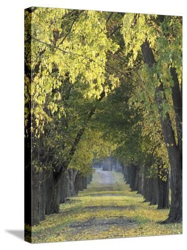 Roadway through Trees in Autumn, Louisville, Kentucky, USA-Adam Jones-Stretched Canvas Print