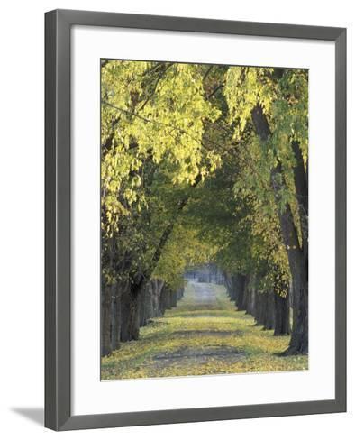 Roadway through Trees in Autumn, Louisville, Kentucky, USA-Adam Jones-Framed Art Print