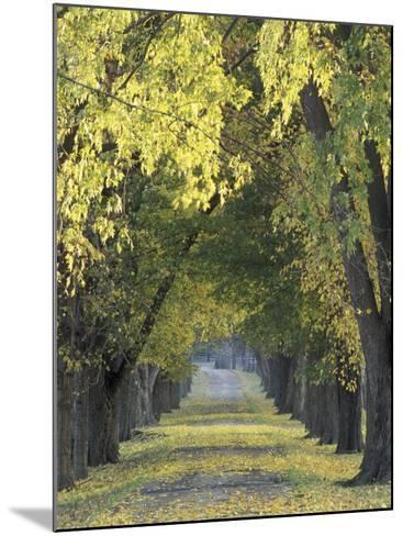 Roadway through Trees in Autumn, Louisville, Kentucky, USA-Adam Jones-Mounted Photographic Print