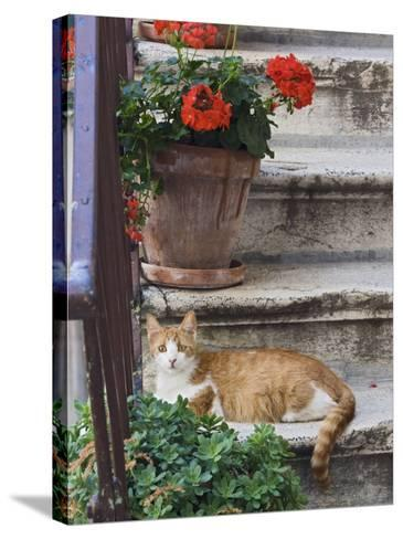Cat On Steps in Alley, Rovigno, Croatia-Adam Jones-Stretched Canvas Print