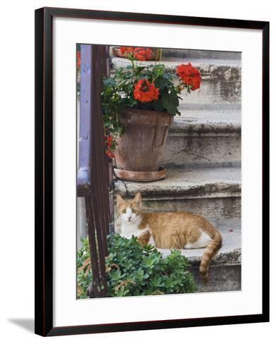 Cat On Steps in Alley, Rovigno, Croatia-Adam Jones-Framed Art Print