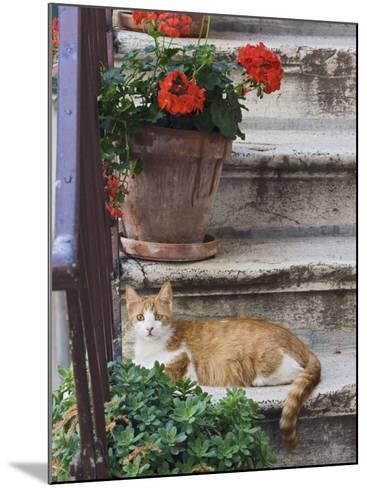 Cat On Steps in Alley, Rovigno, Croatia-Adam Jones-Mounted Photographic Print