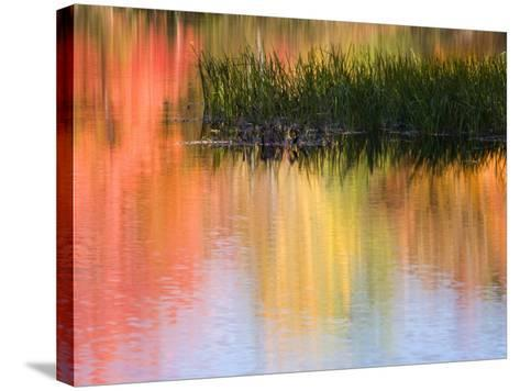Grasses Growing in Water Reflecting, South Paris, Maine, USA-Wendy Kaveney-Stretched Canvas Print