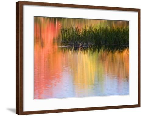 Grasses Growing in Water Reflecting, South Paris, Maine, USA-Wendy Kaveney-Framed Art Print