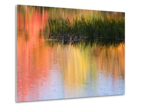 Grasses Growing in Water Reflecting, South Paris, Maine, USA-Wendy Kaveney-Metal Print