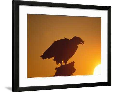 Bald Eagle Silhouette at Sunset, Kachemak Bay, Alaska, USA-Steve Kazlowski-Framed Art Print