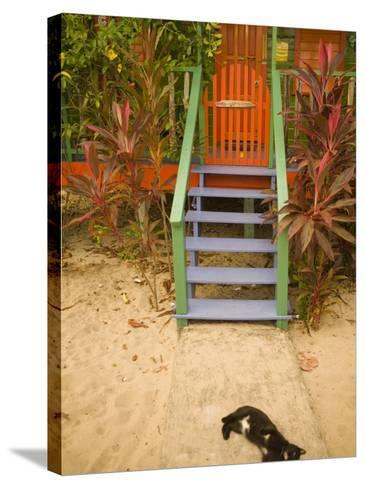 Cat Sleeping By Entrance, Placencia, Stann Creek District, Belize-John & Lisa Merrill-Stretched Canvas Print
