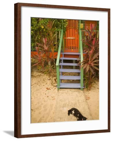 Cat Sleeping By Entrance, Placencia, Stann Creek District, Belize-John & Lisa Merrill-Framed Art Print