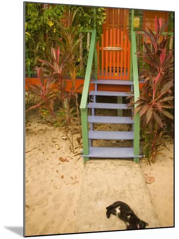Cat Sleeping By Entrance, Placencia, Stann Creek District, Belize-John & Lisa Merrill-Mounted Photographic Print