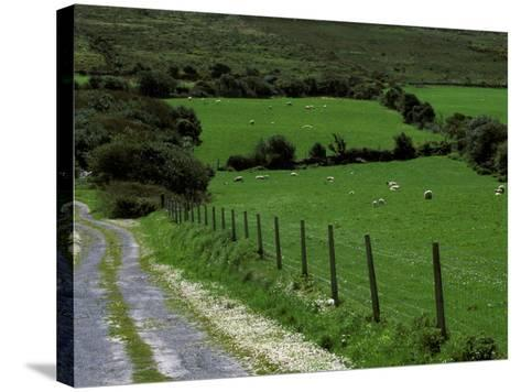 Scenic Dirt Road with Wildflowers, County Cork, Ireland-Marilyn Parver-Stretched Canvas Print