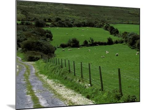 Scenic Dirt Road with Wildflowers, County Cork, Ireland-Marilyn Parver-Mounted Photographic Print