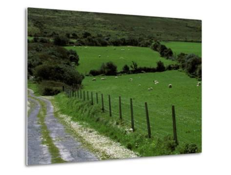 Scenic Dirt Road with Wildflowers, County Cork, Ireland-Marilyn Parver-Metal Print