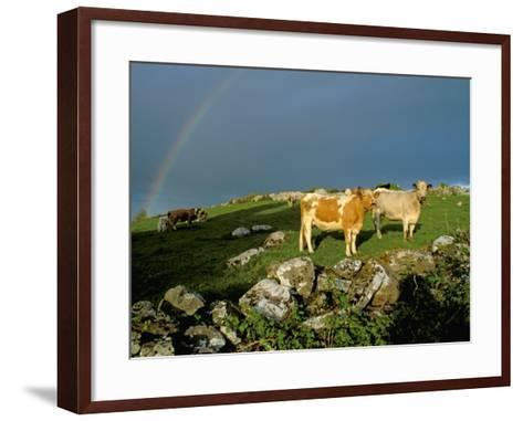 Cows and Rock Wall, Ireland-Marilyn Parver-Framed Art Print