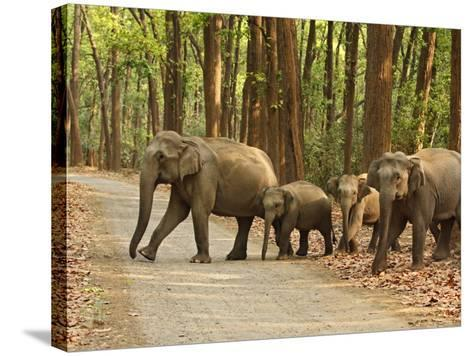 Royal Bengal Tiger Watching, Ranthambhor National Park, India-Jagdeep Rajput-Stretched Canvas Print