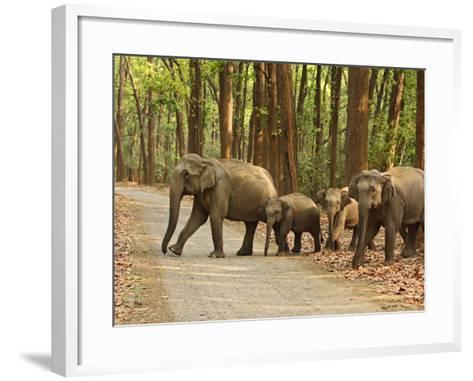 Royal Bengal Tiger Watching, Ranthambhor National Park, India-Jagdeep Rajput-Framed Art Print