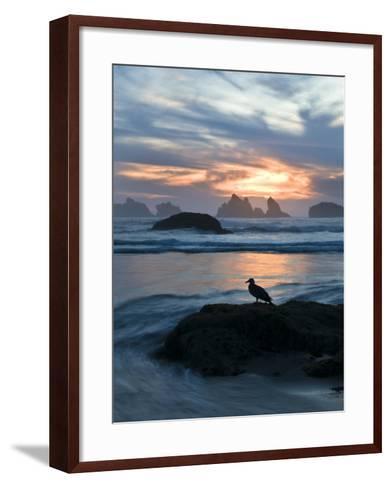 Seagull Silhouette on Coastline, Bandon Beach, Oregon, USA-Nancy Rotenberg-Framed Art Print
