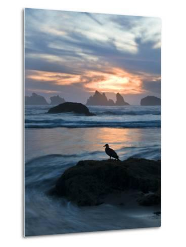 Seagull Silhouette on Coastline, Bandon Beach, Oregon, USA-Nancy Rotenberg-Metal Print
