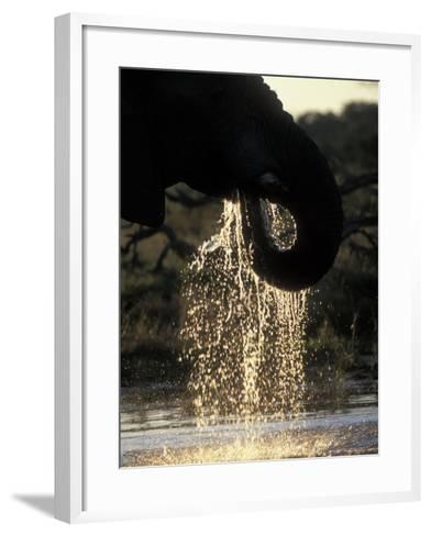Elephant at Water Hole, Savuti Marsh, Chobe National Park, Botswana-Paul Souders-Framed Art Print