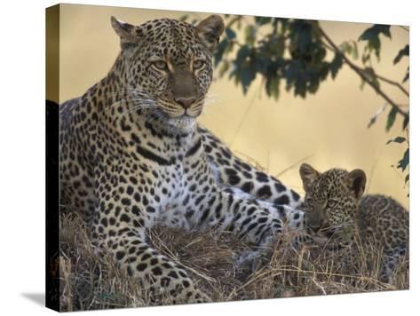 Leopard and Cub Resting, Masai Mara Game Reserve, Kenya-Paul Souders-Stretched Canvas Print