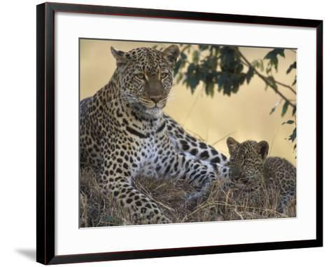 Leopard and Cub Resting, Masai Mara Game Reserve, Kenya-Paul Souders-Framed Art Print