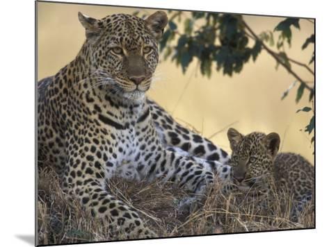 Leopard and Cub Resting, Masai Mara Game Reserve, Kenya-Paul Souders-Mounted Photographic Print