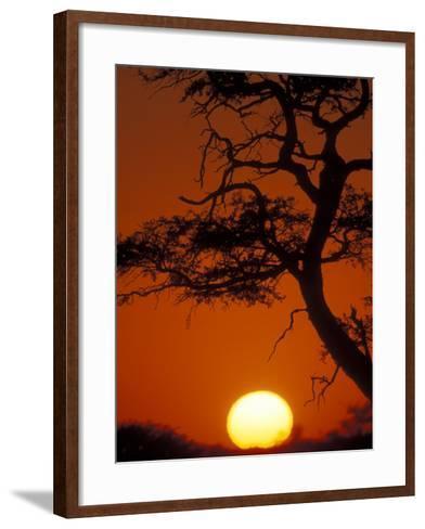 Silhouetted Tree Branches, Kalahari Desert, Kgalagadi Transfrontier Park, South Africa-Paul Souders-Framed Art Print