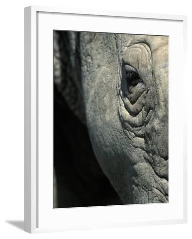 Eye of White Rhinoceros, Lake Nakuru National Park, Kenya-Paul Souders-Framed Art Print