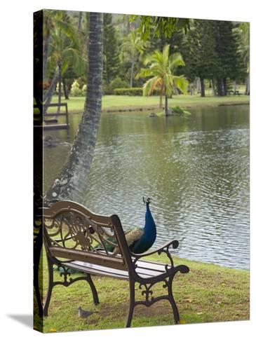 Peacock at the Smith Family Luau Garden Grounds, Kauai, Hawaii, USA-Savanah Stewart-Stretched Canvas Print