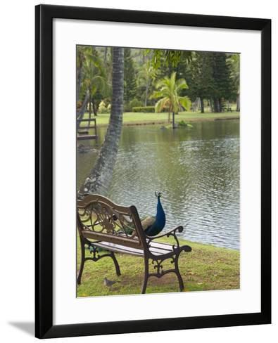 Peacock at the Smith Family Luau Garden Grounds, Kauai, Hawaii, USA-Savanah Stewart-Framed Art Print