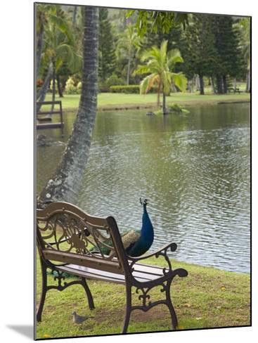Peacock at the Smith Family Luau Garden Grounds, Kauai, Hawaii, USA-Savanah Stewart-Mounted Photographic Print