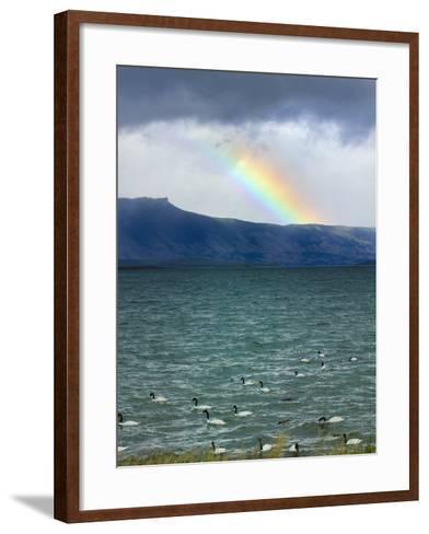 Black-Necked Swans, Torres Del Paine National Park, Patagonia, Chile-Keren Su-Framed Art Print
