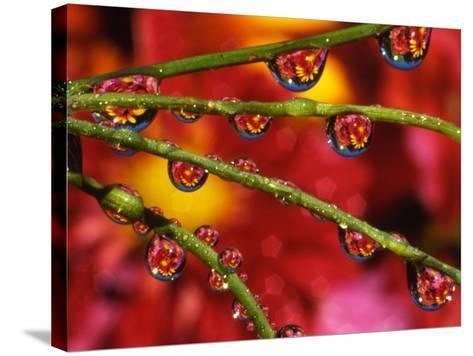 Garden Flowers Reflecting in Dewdrops-Steve Terrill-Stretched Canvas Print