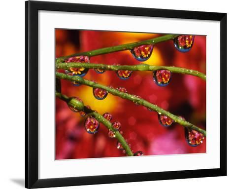 Garden Flowers Reflecting in Dewdrops-Steve Terrill-Framed Art Print