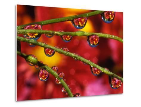 Garden Flowers Reflecting in Dewdrops-Steve Terrill-Metal Print