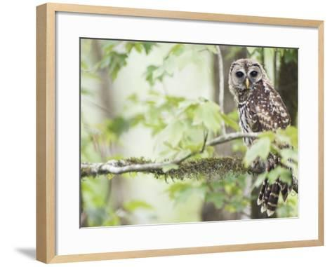 Barred Owl, Vacharie, Louisiana, USA-Rob Tilley-Framed Art Print