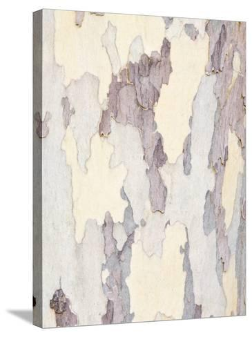 Sycamore Trunk Detail, Sedona, Arizona, USA-Rob Tilley-Stretched Canvas Print