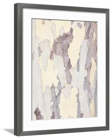 Sycamore Trunk Detail, Sedona, Arizona, USA-Rob Tilley-Framed Art Print