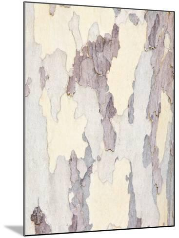 Sycamore Trunk Detail, Sedona, Arizona, USA-Rob Tilley-Mounted Photographic Print