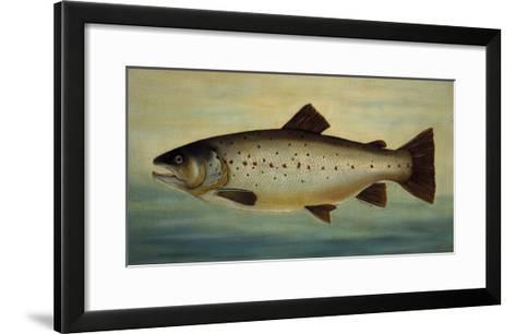 Brown Trout-Porter Design-Framed Art Print