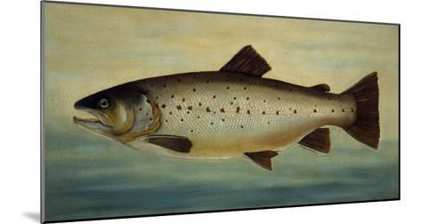 Brown Trout-Porter Design-Mounted Premium Giclee Print