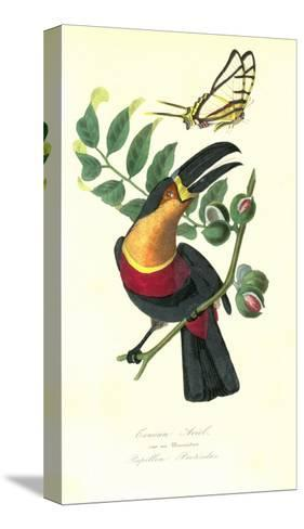 Toucan on Nutmeg-Porter Design-Stretched Canvas Print
