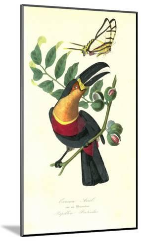 Toucan on Nutmeg-Porter Design-Mounted Premium Giclee Print